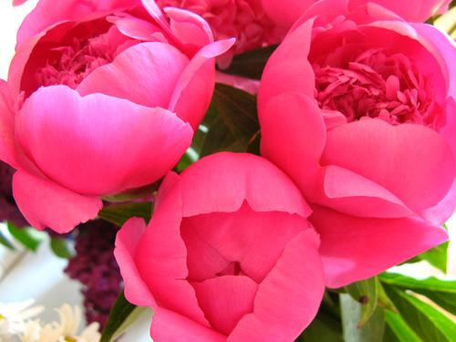 Как правило любят нежные мелкие цветы