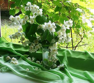 цветы для девушки